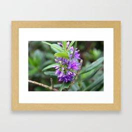 Purple Paradise Framed Art Print