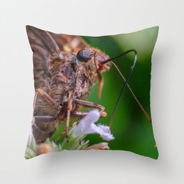 Happy Silver Spotted Skipper Butterfly. Macro Butterfly Photograph Throw Pillow