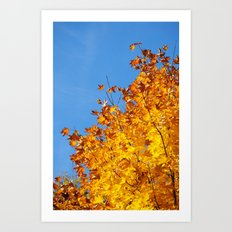 Herbstfarben  Art Print