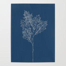 English Oak Blueprint Poster