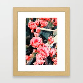 closeup blooming red cactus flower texture background Framed Art Print