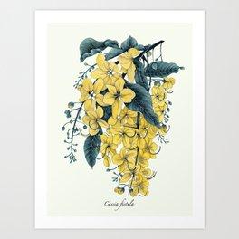 Cassia fistula Art Print