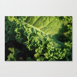 Beauty of Kale Canvas Print