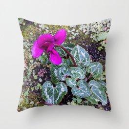 Beautiful cyclamen flower  Throw Pillow