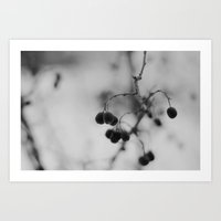 [Fruits d'hiver] Art Print
