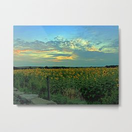 Sunflower Field at Dusk Metal Print