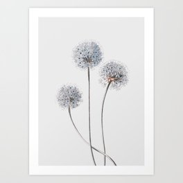 Dandelion 2 Art Print