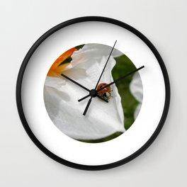 ladybug macro XVI Wall Clock