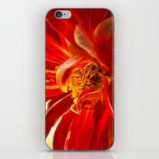 Dahlia 2 iPhone & iPod Skin