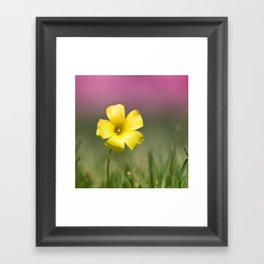 Yellow on Pink Framed Art Print