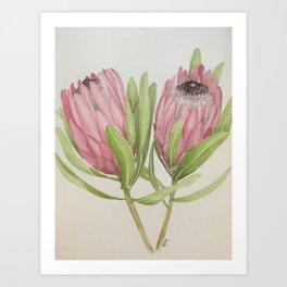 Watercolour Proteas Art Print
