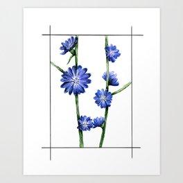 Chicory Art Print