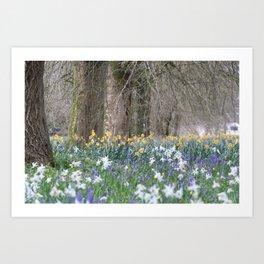 Flower Field of Blarney Art Print