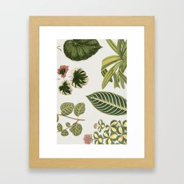 Green Botanical Plants Watercolor Pattern Framed Art Print
