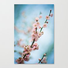 apricot blossom 2 of 2 Canvas Print