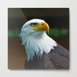 American Bald Eagle Head Metal Print
