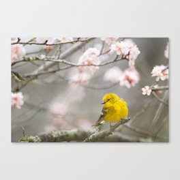 Pine Warbler #society6 #decor #buyart Canvas Print