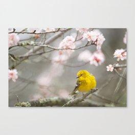 Pine Warbler #society6 #decor #buyart Canvas Print