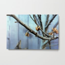 Flowering Seed Pods Metal Print