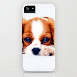 Cavalier King Charles iPhone Case