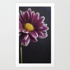 Daisy light Art Print