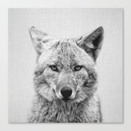Coyote - Black & White Canvas Print