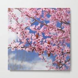 Pink dreams. Spring  Metal Print