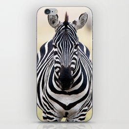 Zebra looking at you iPhone Skin