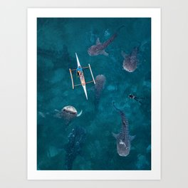 Swimming with whale sharks! Art Print