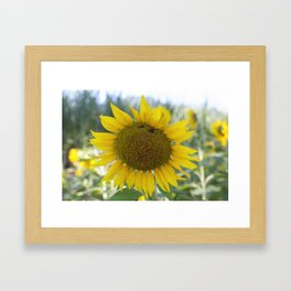 Summer Sunflower Framed Art Print