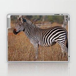 Zebra in the sunlight, Africa wildlife Laptop & iPad Skin