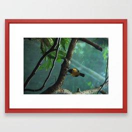 Awkward Birdy Framed Art Print