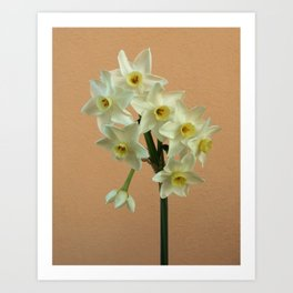 Orange Narcissus Art Print