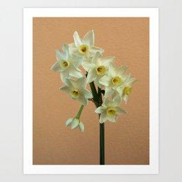 Orange Narcissus Art Print