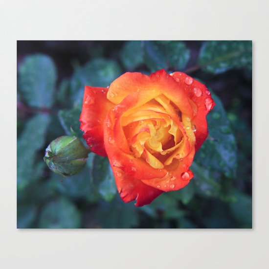 Multicolor Rose Canvas Print