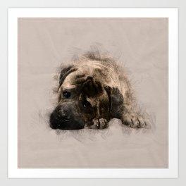 Bullmastiff Puppy Sketch Art Print