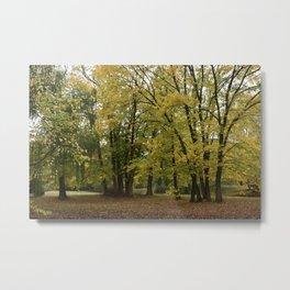 Malmsbury Botanic Gardens No. 1 Metal Print