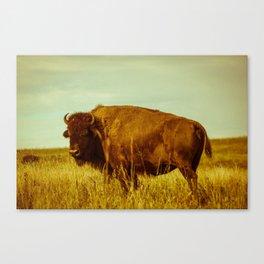 Vintage Bison - Buffalo on the Oklahoma Prairie Canvas Print