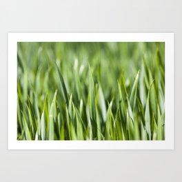 Agriculture. cereals. Spring Art Print