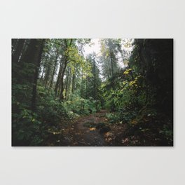 Rainy Forest Canvas Print