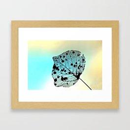 Weathered Poplar Leaf, Skeltn leaf Framed Art Print