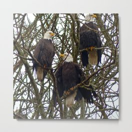 Three Eagles Metal Print