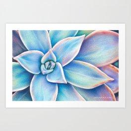 Succulent colored pencil drawing Art Print