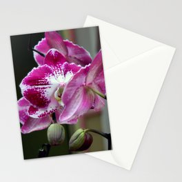 Moths In The Mirror Stationery Cards