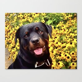 Stop and Smell the Flowers, Rottweiler, Coneflowers, Garden, Photograph Canvas Print