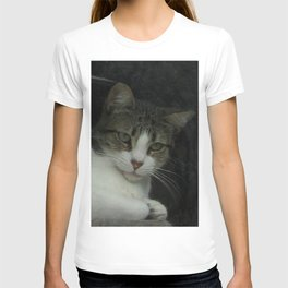through the looking glass - cat meditating at the window T-shirt