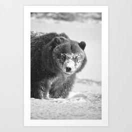 Alaskan Grizzly Bear in Snow, B & W - 3 Art Print