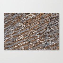 Cracked Stone Striations Canvas Print