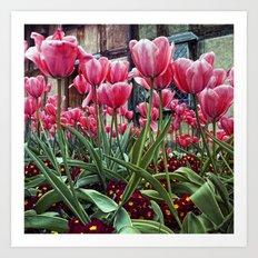 Cotswold Tulips Art Print