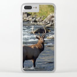 Yellowstone Bull Elk Clear iPhone Case